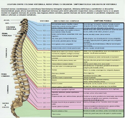 wpid-coloana-nervi1.jpg